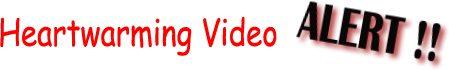 VIDEOALERT